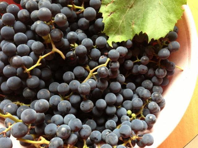 Сорт винограда Абу Хасана описание