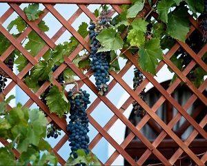 Арка под виноград из металла своими руками: как сделать из профильной трубы – описание с фото