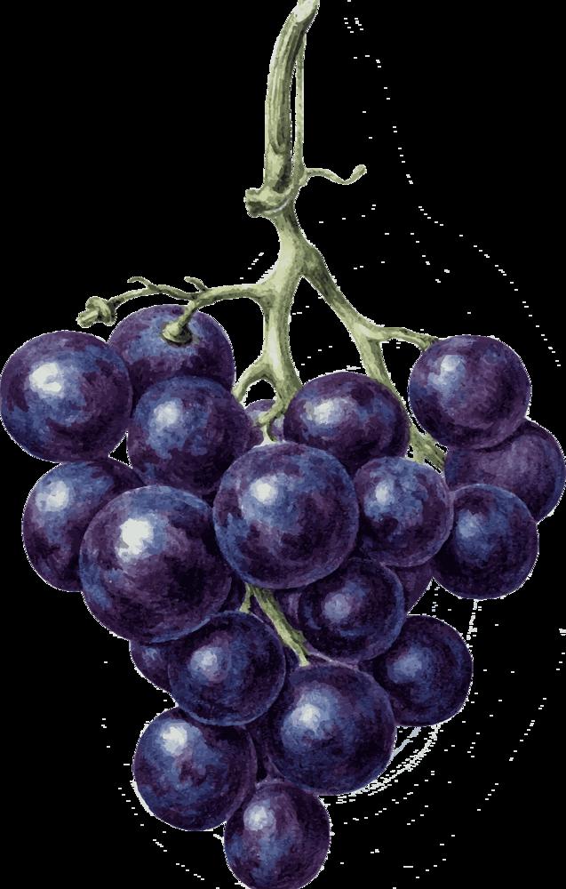 Посадка саженцев винограда осенью