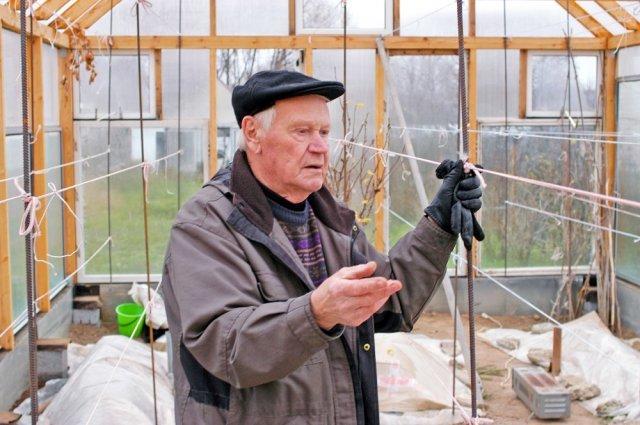 Как укрывать виноград на зиму: уход, подготовка, обрезка и обработка осенью в Подмосковье, в Сибири и средней полосе. Сорта не требующие утепления