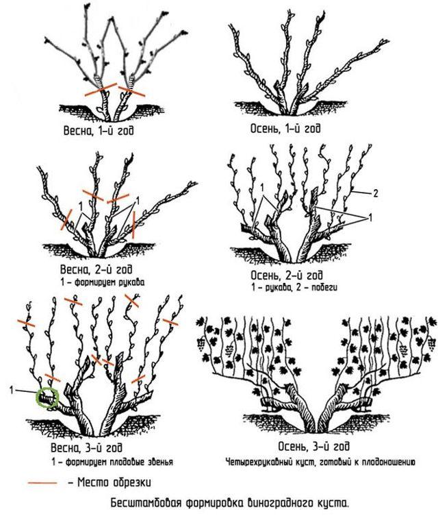 Виноград «кардинал»: описание сорта, фото и отзывы. Основные его плюсы и минусы, характеристики и особенности выращивания в регионах