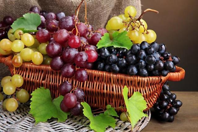 Сорт винограда Седой (ВН-6) описание, характеристики